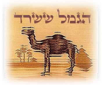 הגמל ששרד - ביוגרפיה עברית מלאה של להקת קאמל