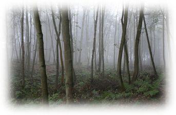 יער ציורי
